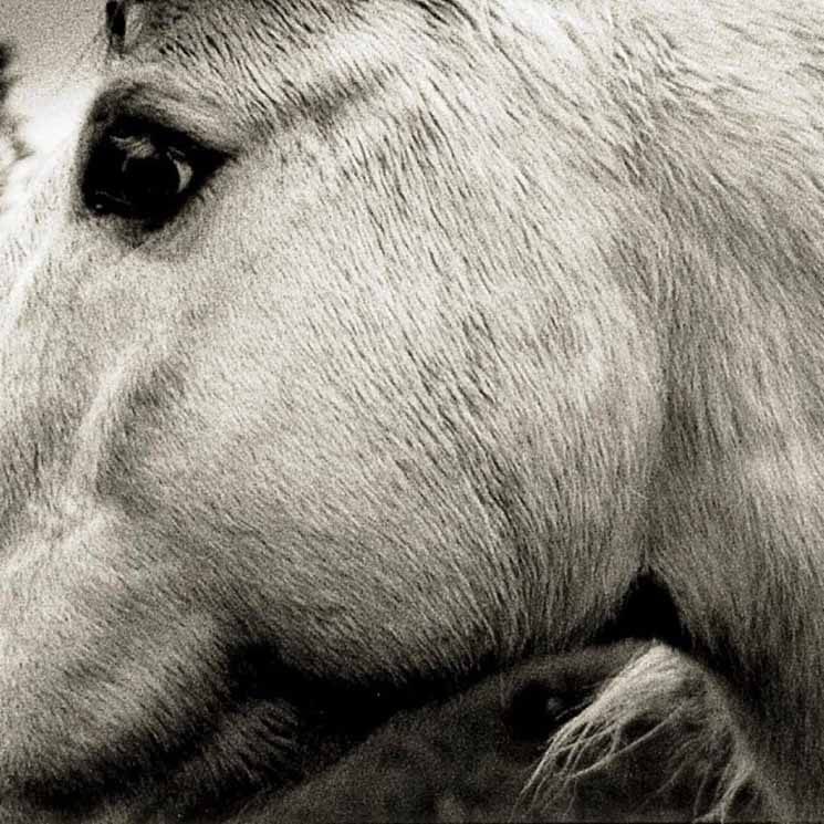 Bonny Light Horseman – Bonny Light Horseman (2020) [FLAC]